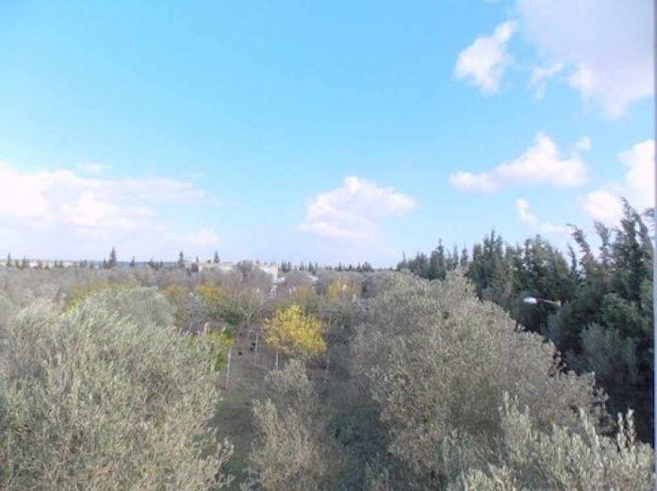 Foret olivier