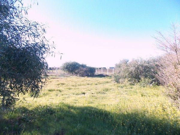 Propriété agricole région de Benslimane