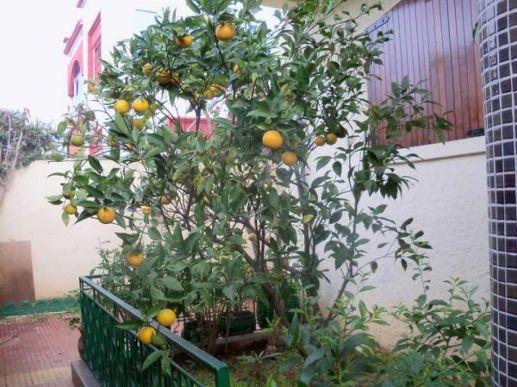 Location villa meublée quartier Yasmina