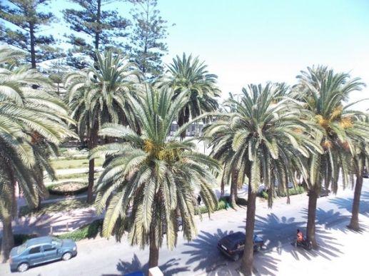 Location de bureaux vue sur le Parc à Mohammedia