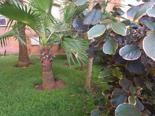 Ricoflores, Mansouria